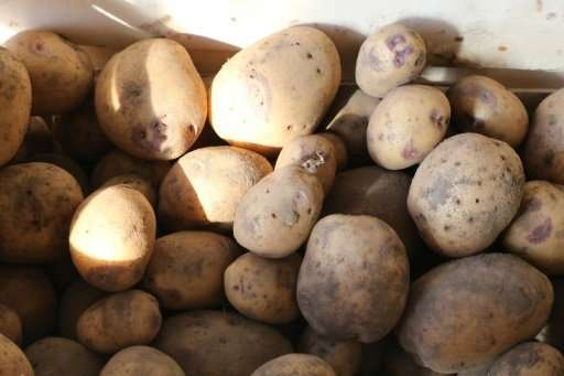 "A new study says the introduction of potatoes and the resultant increase in productivity ""dramatically reduced conflict&quo"