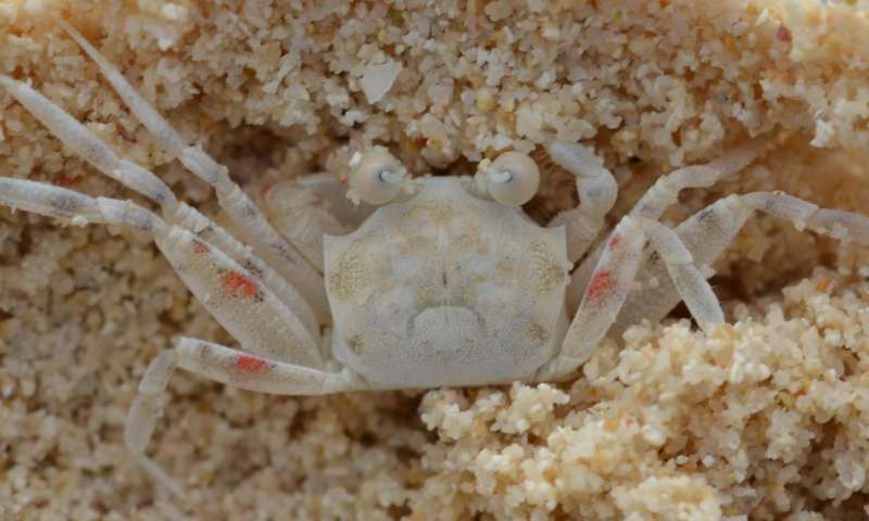 Animals actively choose to match their surroundings to avoid predation