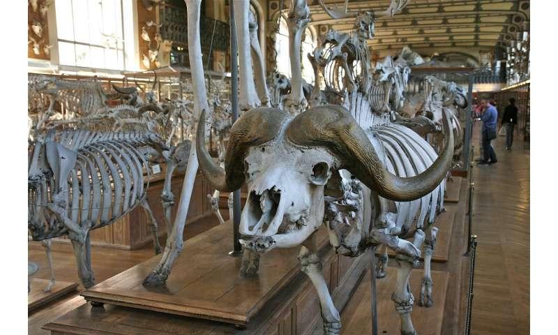 animals museum