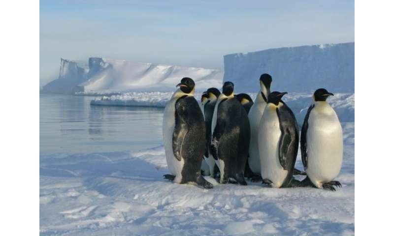 Antarctic sea ice extent lowest on record