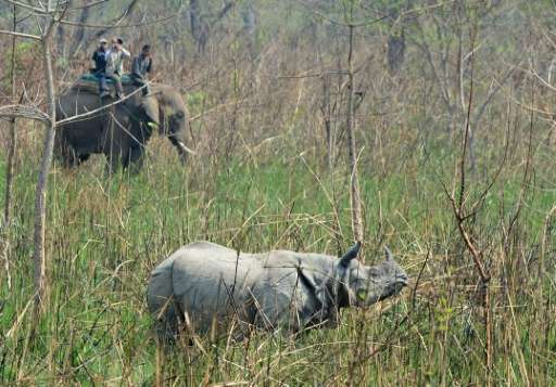 A one-horn rhino in Nepal's Chitwan National Park during an operation by conservationists this month