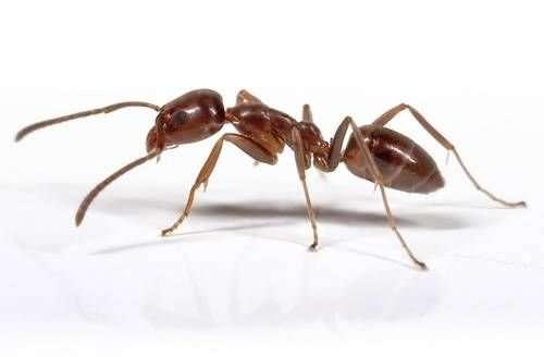 A prioritised list of invasive alien species threatening the UK's environment