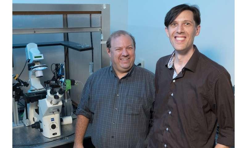 Aspirin-like pain reliever diflunisal blocks hearing protein