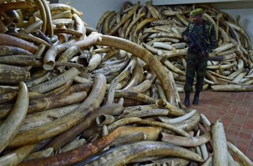At its peak in 2014 wholesale prices for raw ivory stood at $2,100 (1,900 euros) per kg in Chinese markets, according to a repor