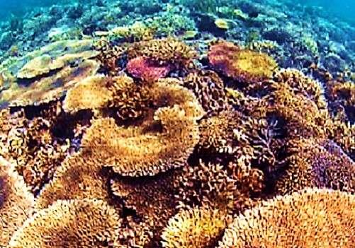 A warm relationship between corals and bacteria