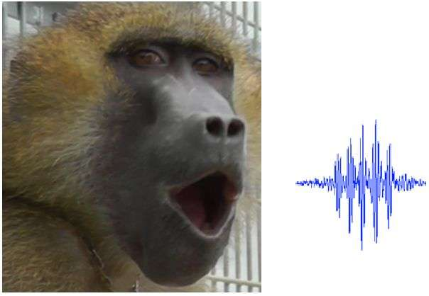 Baboon vocalizations contain five vowel-like sounds comparable to those of human speech