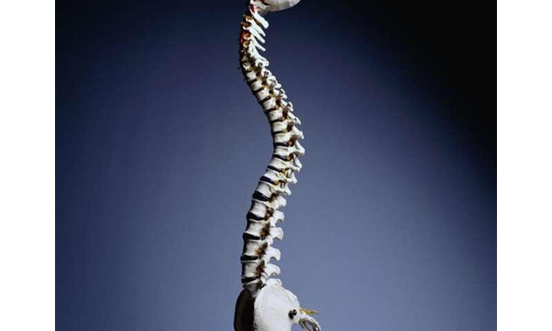 Back pain in older men tied to incident vertebral fractures