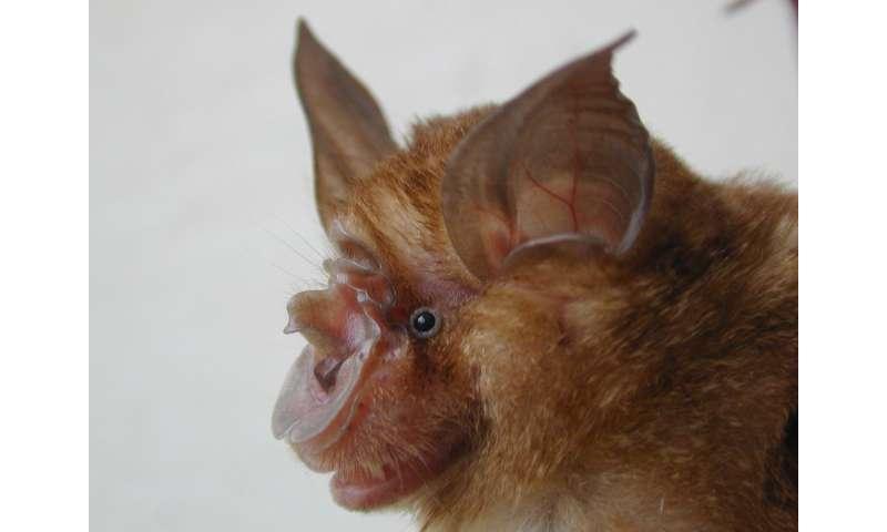 Bat cave study sheds new light on origin of SARS virus