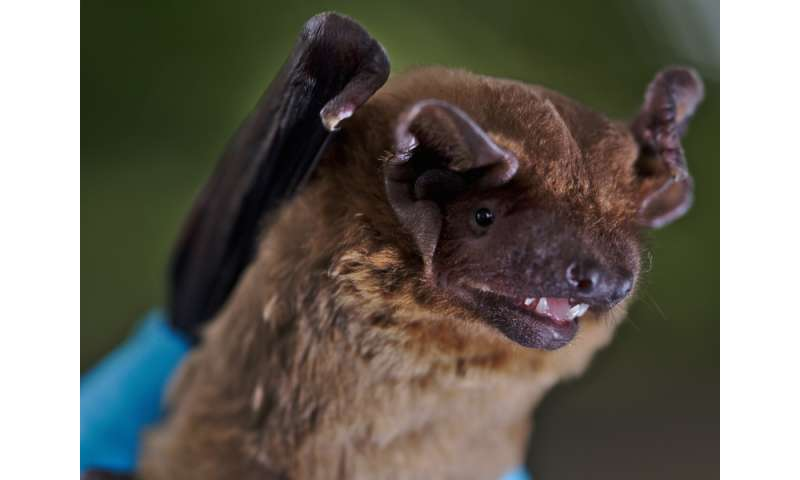 Bats anticipate optimal weather conditions