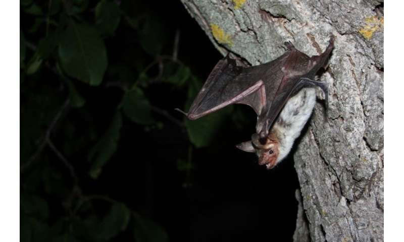 Bats fail to detect smooth, vertical surfaces when they are in a rush