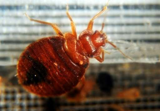 how to get bed bugs out of clothes