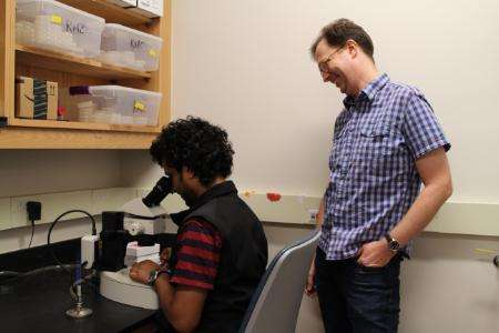 Biologists identify signals that drive distinct behavior in microscopic nematode worms