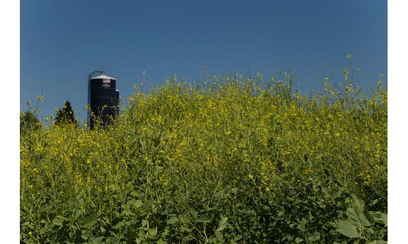 Bioprocessing engineers recover glucosinolate from oilseed meal