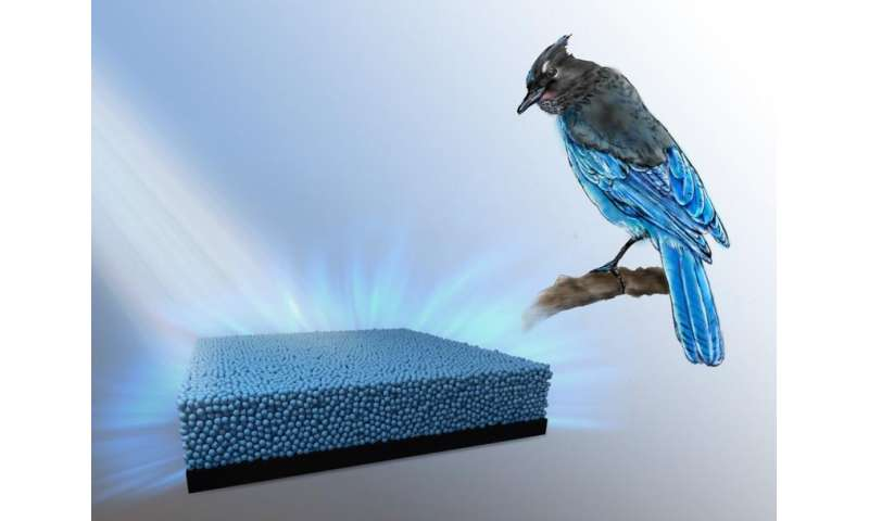 Bird feathers inspire researchers to produce vibrant new colors
