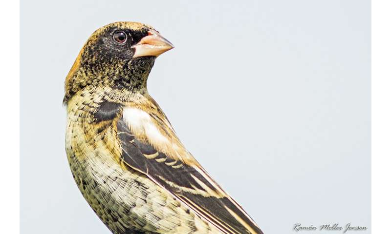 Birds' feathers reveal their winter diet