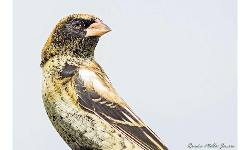Birds' feathers reveal their winter diet