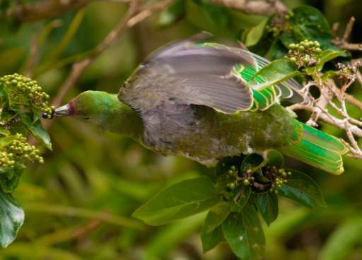 Birds play a critical role by eating and spreading seeds from tropical trees