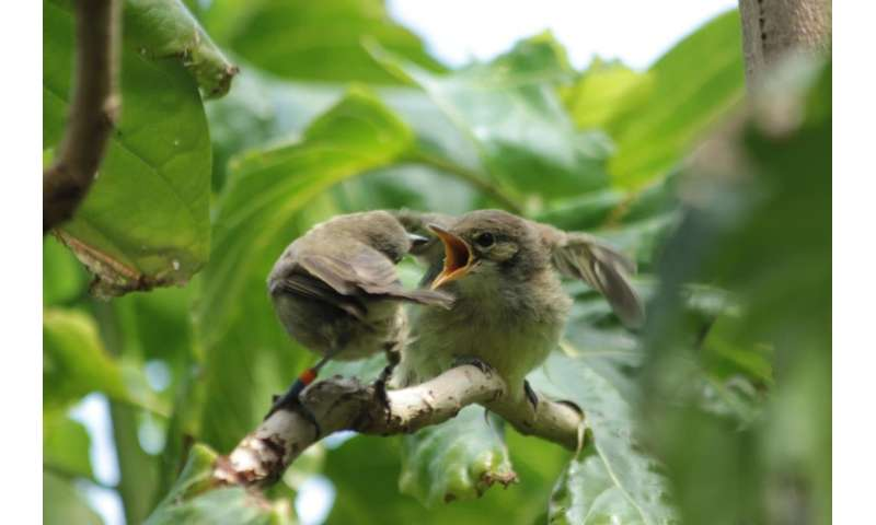 Birds without own brood help other birds with parenting, but not selflessly