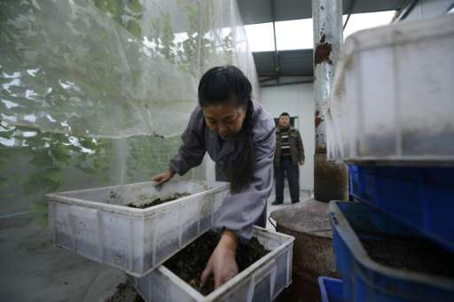 Black soldier fly farms are becoming increasingly common in China, as people rush to cash in on green initiatives.