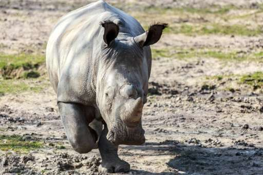 Brutal poachers on Monday killed a white rhino named Vince in a French zoo. It is the first time a European zoo has been breache