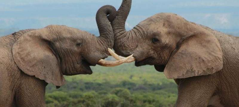 Burning chilli will keep elephants at bay, new study finds