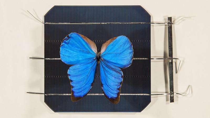 Butterfly wings inspire invention that opens door to new solar technologies »