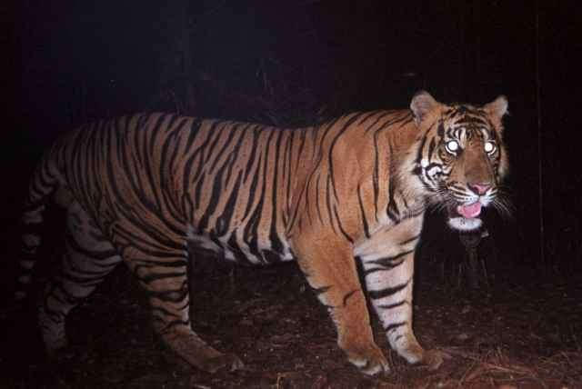 Camera-trap research paves the way for global monitoring networks