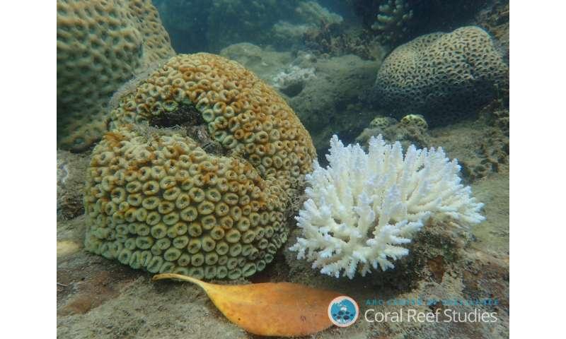 Can corals survive climate change?