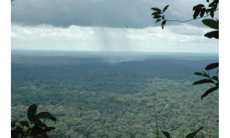 Carbon-based approaches for saving rainforests should include biodiversity studies