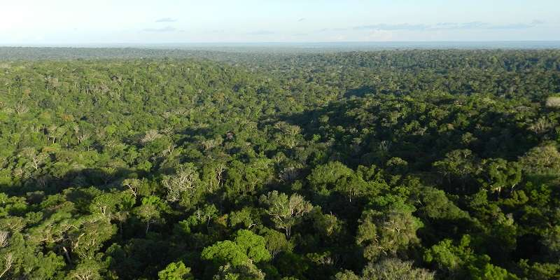 Carbon uptake by Amazon forests matches region's emissions