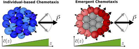 Cells that specialize in groups function more effectively