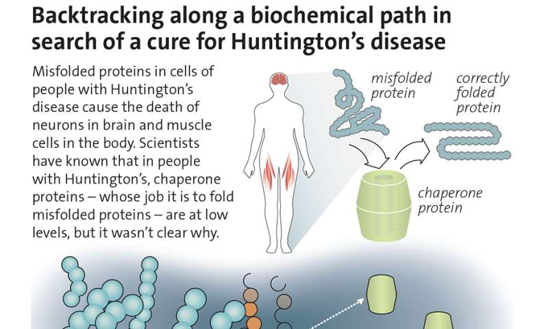 Cellular quality control process could be Huntington's disease drug target