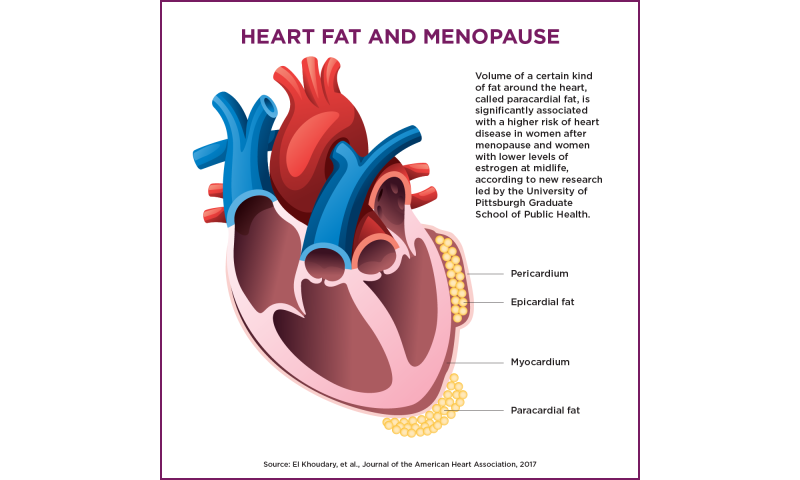 Certain heart fat associated with higher risk of heart disease in postmenopausal women