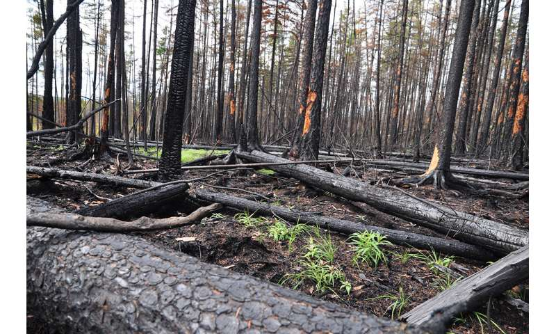 Charcoal remains could accelerate CO2 emissions after forest fires