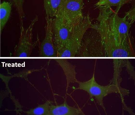 Chemical stimuli can support growing of stable cartilage cells