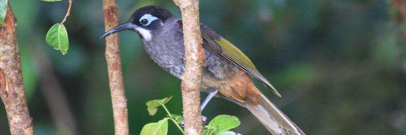 Chillier winters, smaller beaks