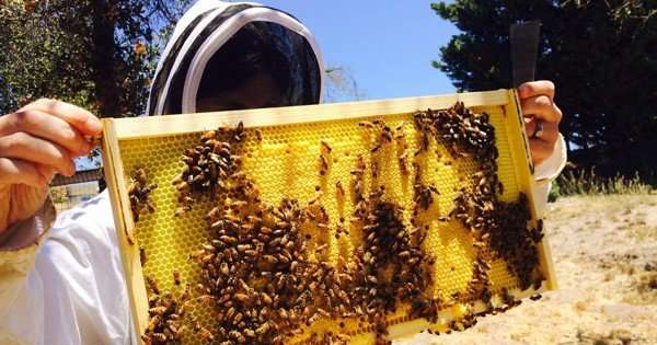 Coal miners shift to beekeeping