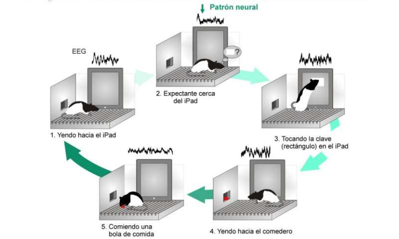 Cognitive-related neural pattern to activate machines