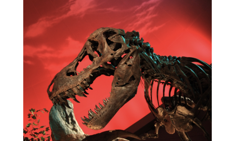 Collagen from a Tyrannosaurus rex bone proves Jurassic Park will never exist