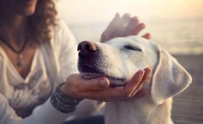 Companion animals delay women leaving domestic violence