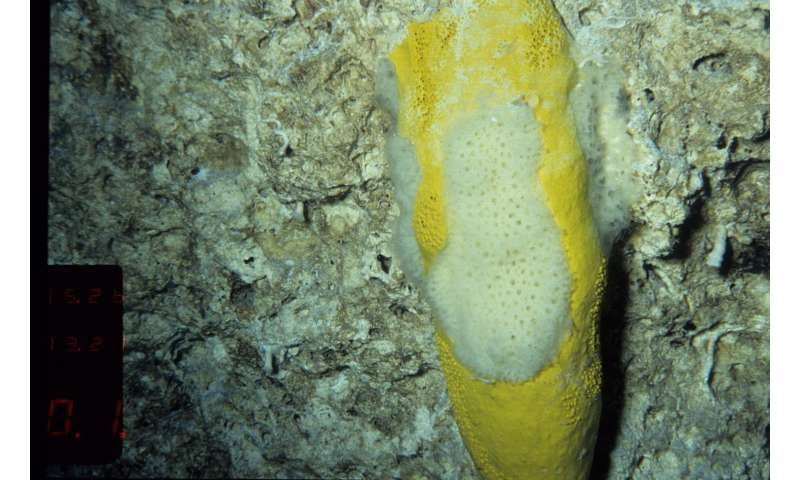 Compound from deep-water marine sponge could provide antibacterial solutions for MRSA