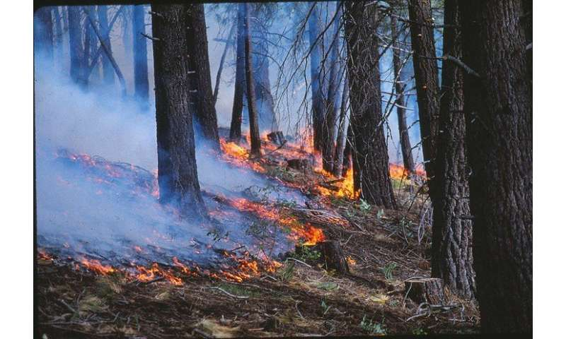 Controlled burns limited severity of Rim Fire, researchers find