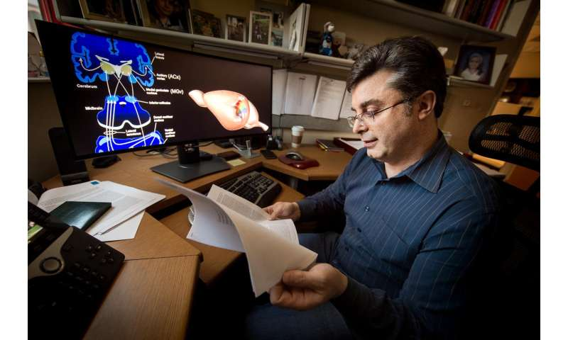 Controlling a single brain chemical may help expand window for learning language and music