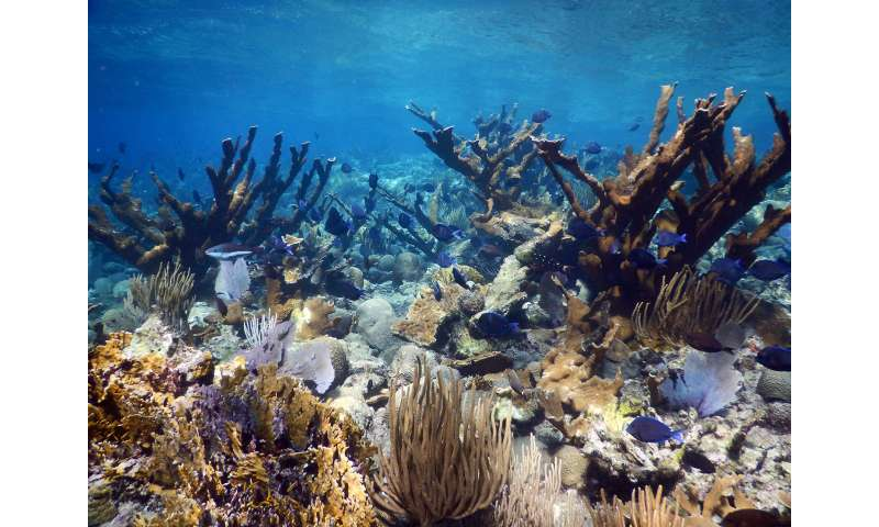 Coral reefs struggle to keep up with rising seas, leave coastal communities at risk