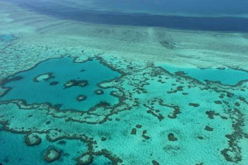 Corals can recover if the water temperature drops and the algae are able to recolonise them, but it can take a decade
