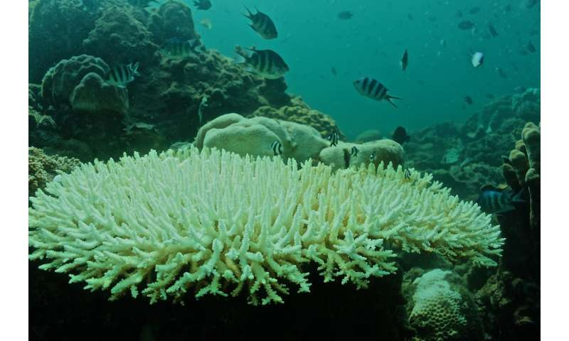 Corals die as global warming collides with local weather in the South China Sea