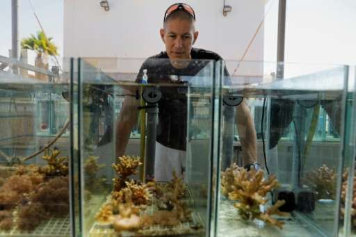 "Corals in the Gulf of Eilat are ""very resilient to high temperature changes and most likely going to be the last to survive"