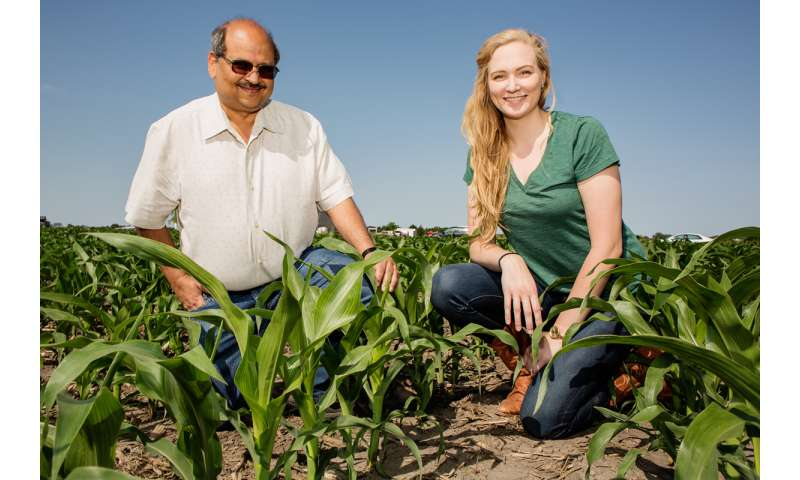 Corn better used as food than biofuel, study finds