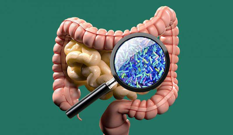 Could modifying gut microbes prevent or delay type 1 diabetes?