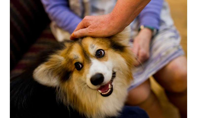 Could therapy animal visitation pose health risks at patient facilities?